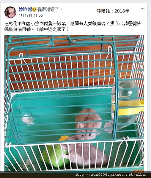 平和國小棄鼠來源.png