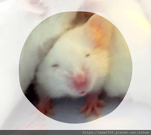 20190602小白鼠 (2).jpg