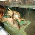 綠蠵龜看起來還真快樂
