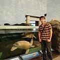 綠蠵龜們已經習慣遊客了
