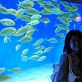 色彩豐富的魚兒