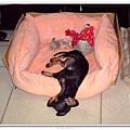 爲什麼都喜歡睡這樣... kiki 喬喬 都這樣睡...