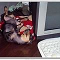 小時後的nicole在電腦旁睡到翻...