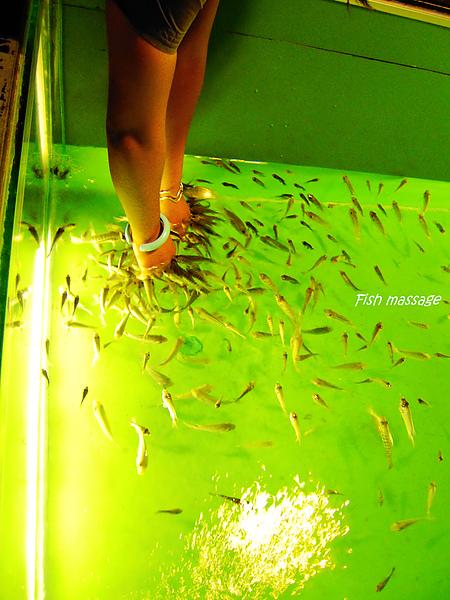fish massage, 一開始被魚咬的感覺還頗怪的