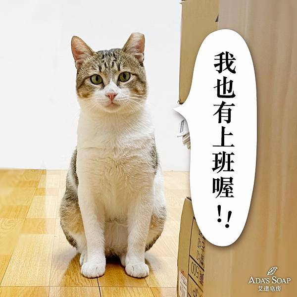 貓掌櫃.jpg