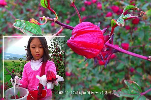 102.11.17採落神花-8.jpg