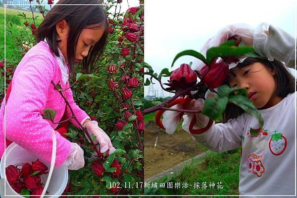 102.11.17採落神花-11.jpg