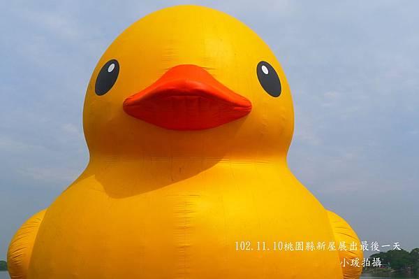 102.11.11黃色小鴨-2.jpg