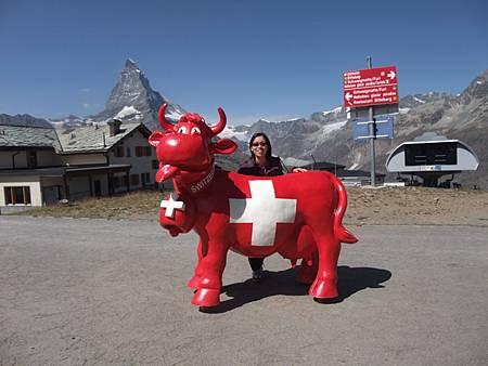 Riffelberg站的牛