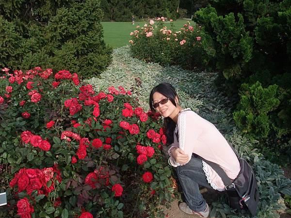 玫瑰花園2