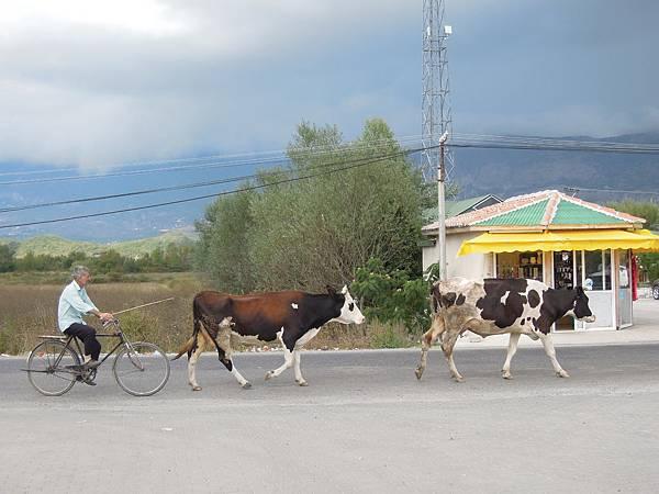 阿爾巴尼亞邊境