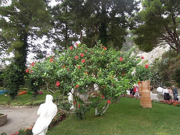 奧古斯都花園 (33).JPG