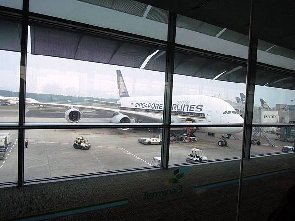 新加坡機場 (2).JPG