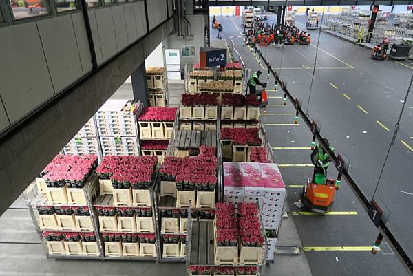 鮮花拍賣市場內09.JPG