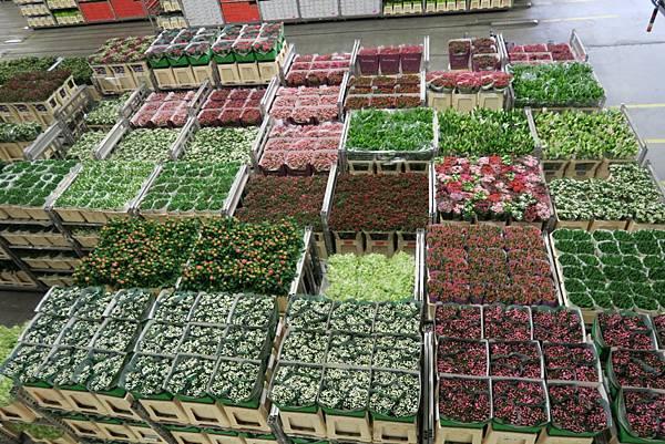 鮮花拍賣市場內20.JPG