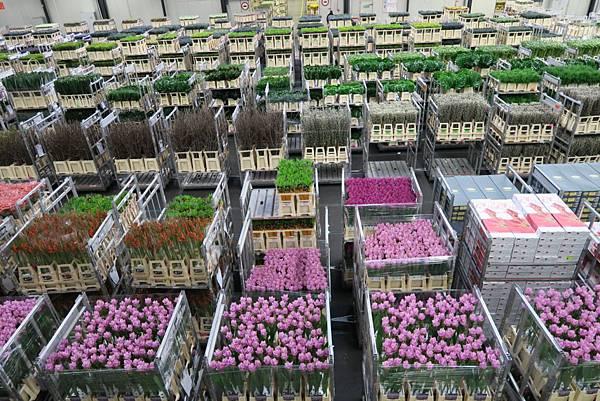 鮮花拍賣市場內27.JPG