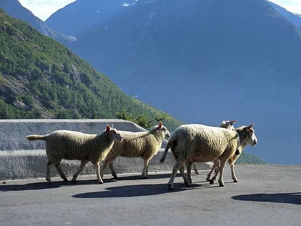 山頂休息站之羊群-1 (3).JPG
