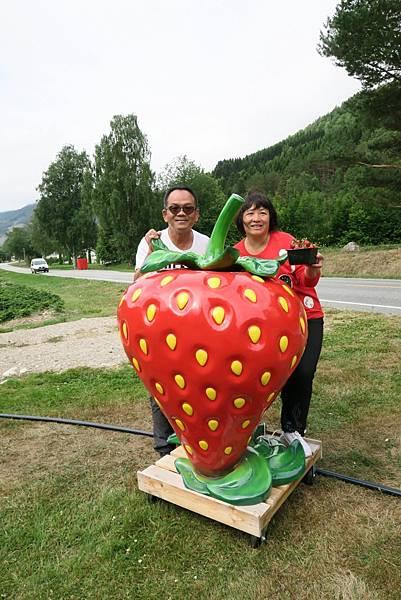 享用酸甜草莓 (7).JPG