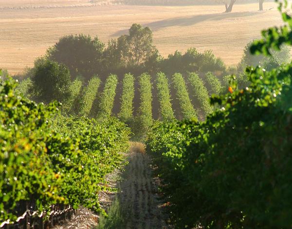 Vineyardsummer_000.jpg