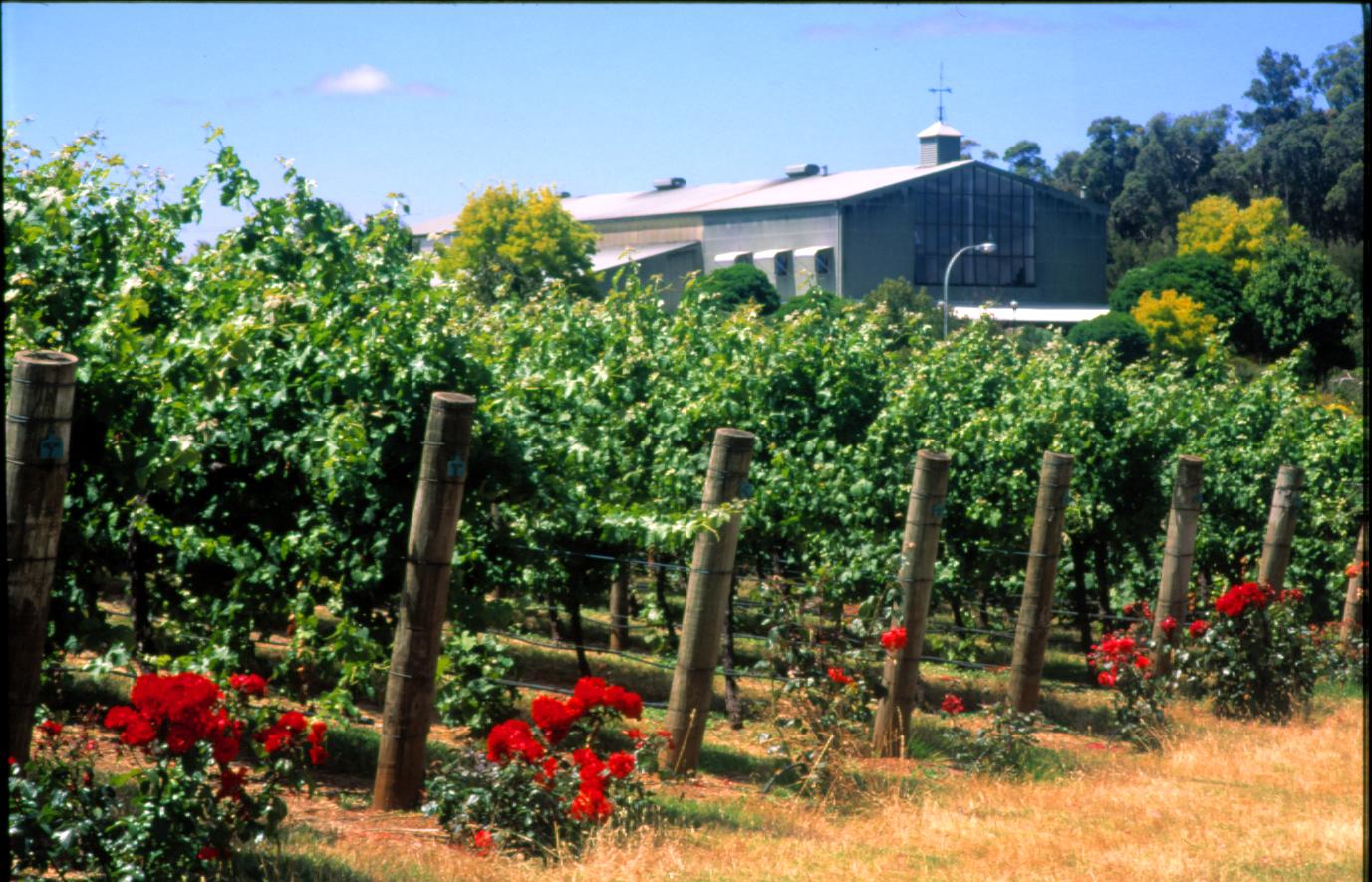 Salitage  Winery.jpg