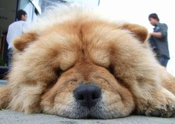 新竹數碼天空的狗.jpg