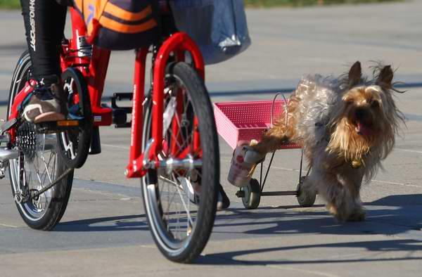 狗騎腳踏車01.jpg