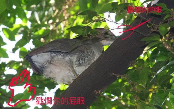 鳥糞02.jpg
