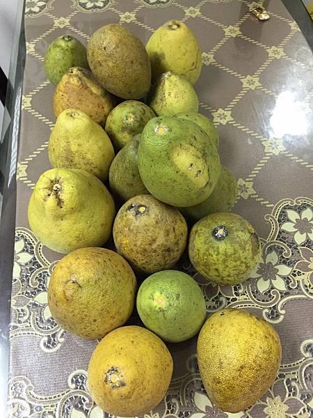 10.13柚子19顆.jpg