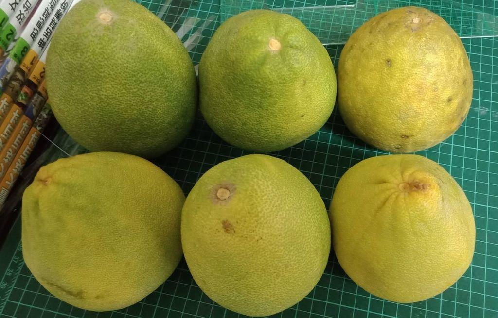 9.20區許阿姨捐贈 柚子六顆.jpg