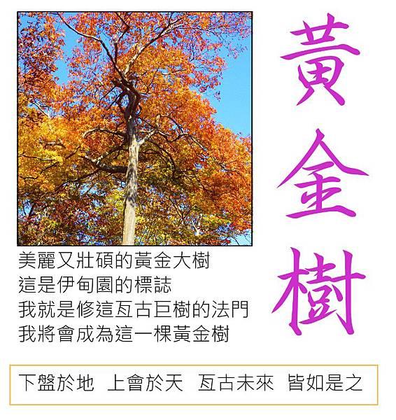 黃金樹.JPG