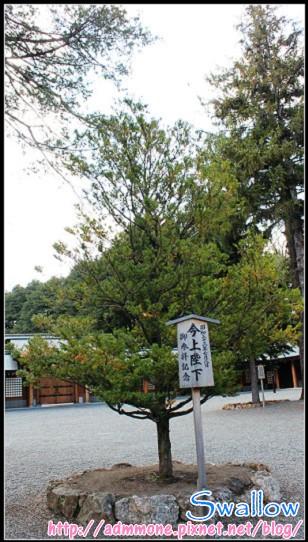 25_北海道神宮_36.jpg