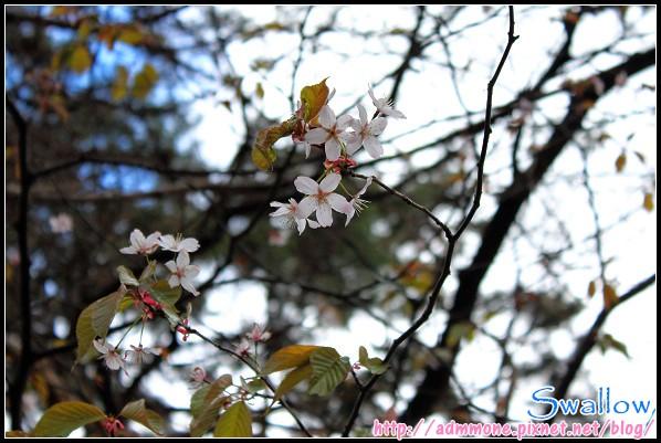 25_北海道神宮_101.jpg