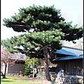 36_52_札幌護國神社.jpg