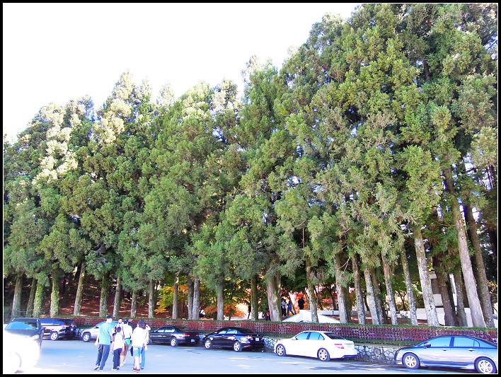 28_壯觀的松林.jpg