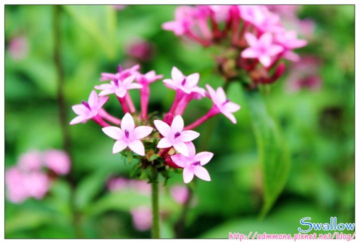 11_好像假的小花.jpg