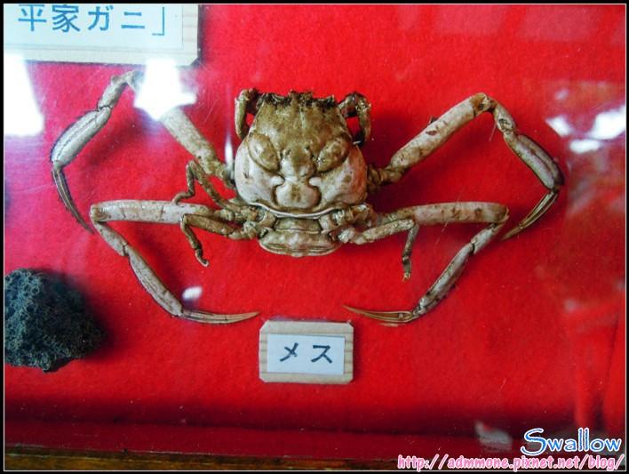 09_24_傳說中平家的蟹1.jpg