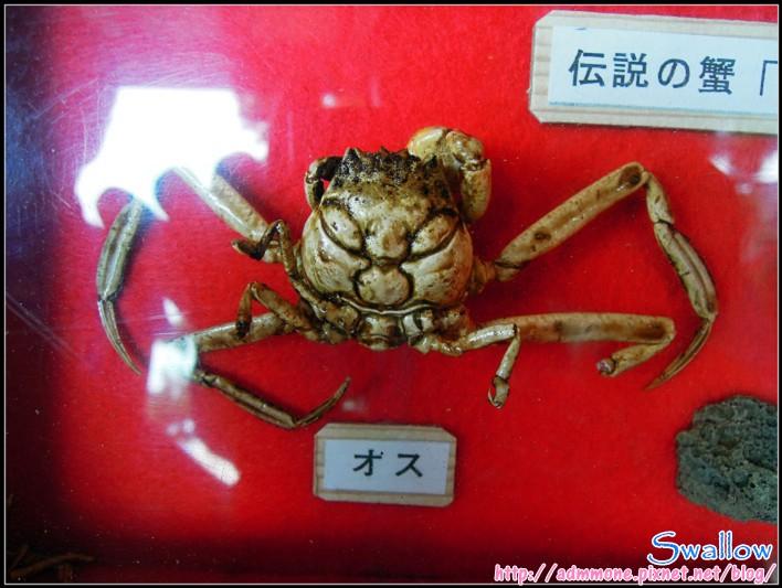 09_24_傳說中平家的蟹2.jpg