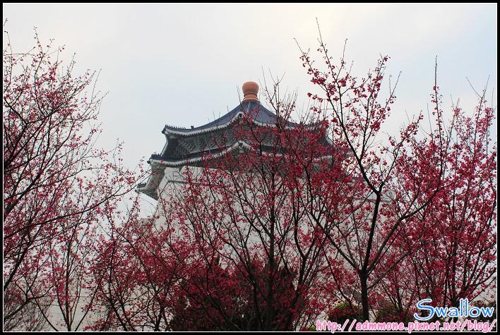 39_山櫻花