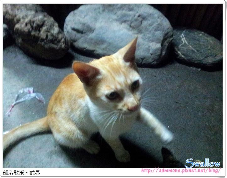 01_20_小吃店黃貓