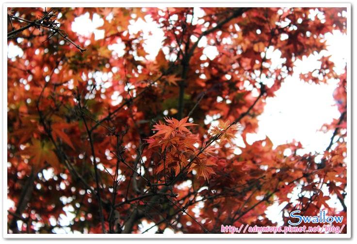 06_4月楓紅