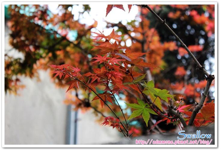 05_4月楓紅