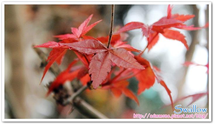 08_4月楓紅
