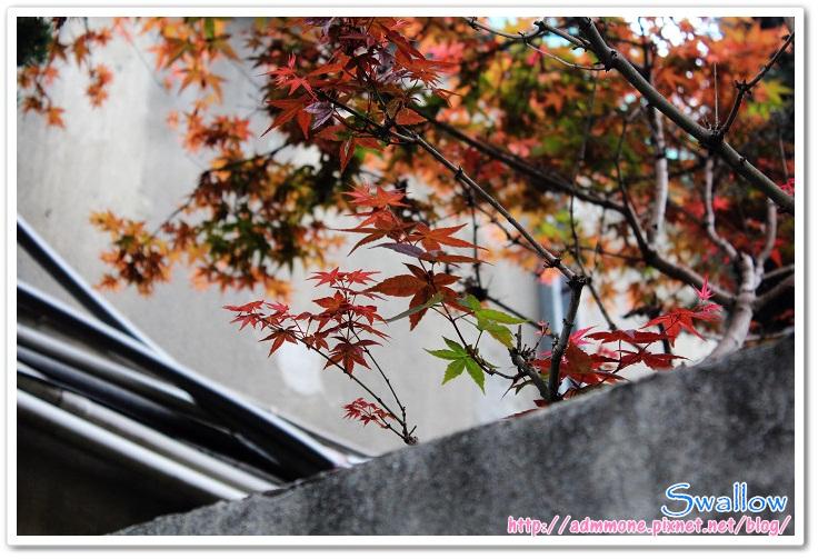 09_圍牆內的楓紅