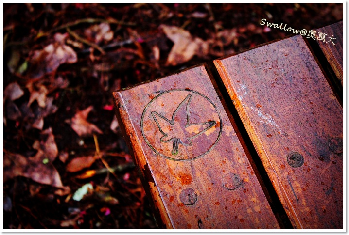 05_09_楓葉標誌