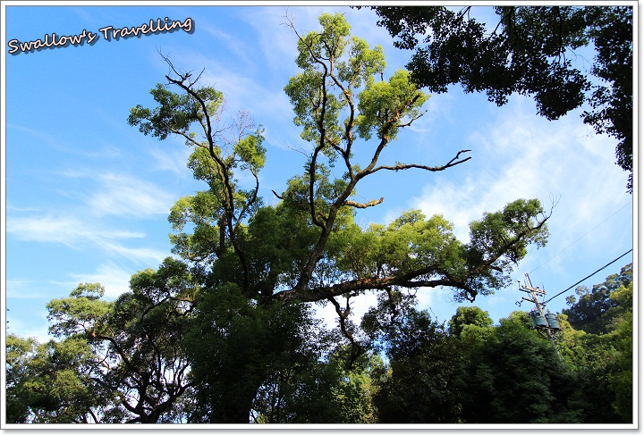 18_大樹