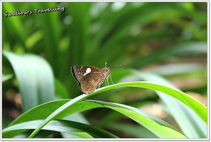 07_蝴蝶