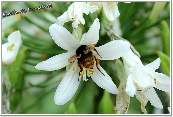 14_愛情花與蜜蜂