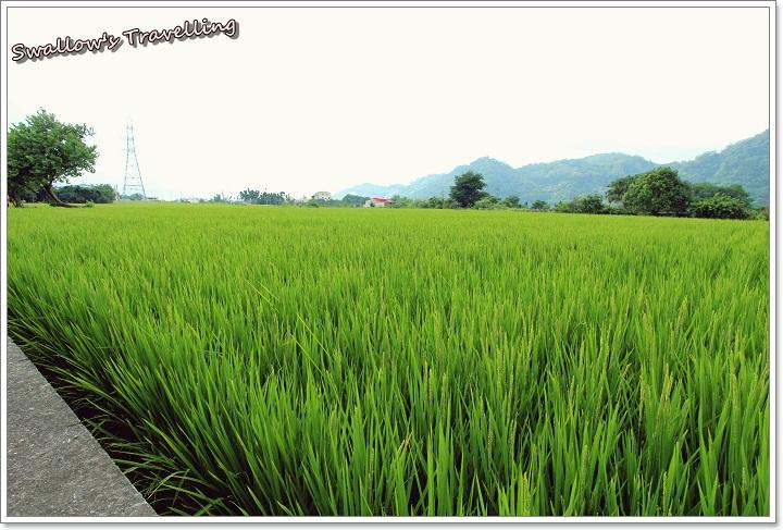 22_水稻田