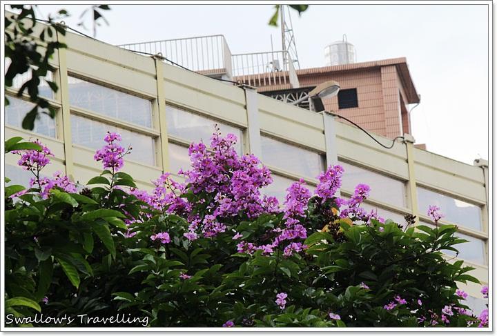 06_大花紫薇