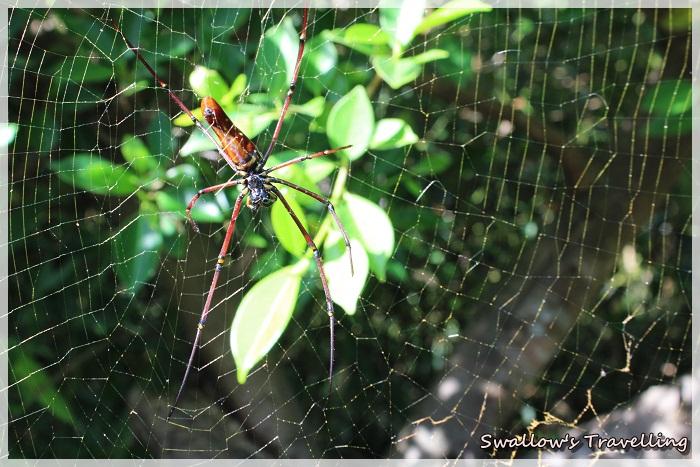 18_大蜘蛛